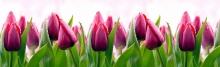 Фартук кухонный ABS тюльпаны